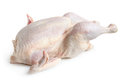 Whole hen on a white background Stock Photos