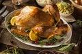 Whole Homemade Thanksgiving Turkey Royalty Free Stock Photo