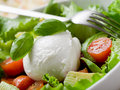 Whole mozzarella with salad Royalty Free Stock Photos