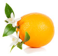 Whole orange fruit leaves flowers white background Stock Image