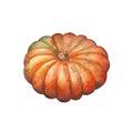 Whole orange pumpkin watercolor illustration. Ripe pumpkin watercolor painting on white background.