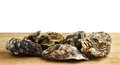 Whole oysters on a wooden surface isolated white with copyspace Stock Images