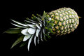 Whole pineapple isolated lying down. Royalty Free Stock Photo