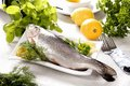 Whole raw trout Royalty Free Stock Photo