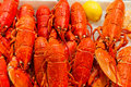 Whole red lobsters with lemon on ice Royalty Free Stock Image