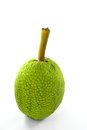 Whole ripe breadfruit on white background Royalty Free Stock Photography