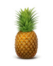 Whole ripe pineapple