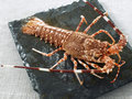 Whole spiny lobster Royalty Free Stock Photo