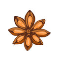 Whole star anise isolated on white background hand drawn aromatic spice food and seasoning aniseed aroma condiment