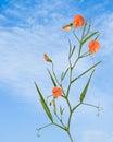 Wicke mit Blumen Lizenzfreies Stockfoto