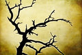 Wicked dead tree on grunge background Royalty Free Stock Photo