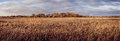 Wicken sedge panoramic at fen nature reserve with fields in the foreground windmill and trees on the horizon in autumn Stock Images