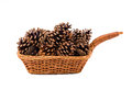 Wicker backet filled pine cones Stock Image