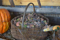 Wicker basket with apples and hazelnuts, standing next to pumpkin and corn Royalty Free Stock Photo