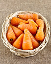 Wicker basket of baby carrots full on a jute sack Royalty Free Stock Images