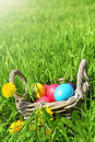 Wicker basket with easter eggs and flowers in the grass Stock Photos