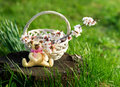Wicker basket with flowers and toy bear blooming branch in the garden Royalty Free Stock Photo
