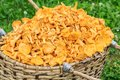 Wicker basket of freshly cut chanterelles close up Royalty Free Stock Photos