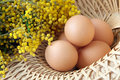 Wicker basket full brown free range eggs Royalty Free Stock Images