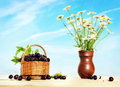 Wicker basket full of cherry and daisies into the pitcher against blue sky Royalty Free Stock Images