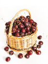 Wicker basket full of ripe cherry on white background Royalty Free Stock Photos