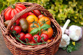 Wicker basket with tomatoes a full of on a garden table Stock Photography