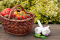 Wicker basket with tomatoes a full of on a garden table Royalty Free Stock Image