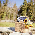 Wicker picnic caddy with blanket and sunflowers outside on a sunny day Stock Photos