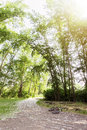 Wide angle view in forest with green trees and bright sun. Royalty Free Stock Photo