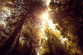 Wide angle view of forest and sun rays Royalty Free Stock Photo