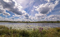 Wide angle view of a summer swamp and cloud reflections in water among yellow water lilies Royalty Free Stock Photo