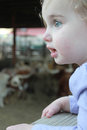 Wide eyed wonder little girl looking in amazement over the longhorns Royalty Free Stock Images