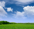 Wide field of green grass forest and blue sky with clouds beautiful summer landscape background Royalty Free Stock Images