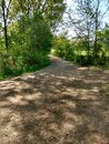 A wide footpath through the trees Royalty Free Stock Photo
