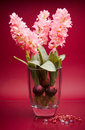 Wide glass vase with three pink flowers Royalty Free Stock Image