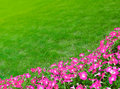 Wide green grass meadow with pink flowers space for text Stock Photo