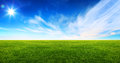 Wide image of green grass field Royalty Free Stock Photo