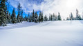 Wide open snowfields, snow covered trees and deep snow pack in the high alpine Royalty Free Stock Photo