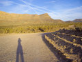 Wide open spaces photographer s shadow in desert landscape filled with joshua trees Royalty Free Stock Images