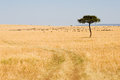 Wide Savannah in Masai Mara National Reserve Stock Image