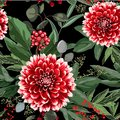 Wide seamless floral background pattern. Red dahlia flowers with christmas berries, branches with leaves on black background.