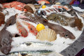 Wide selection of fish on market display seafood Royalty Free Stock Photos