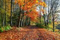 The wide trail covered with fallen leaves, on the sides of which grow trees with still green and already yellow leaves. Royalty Free Stock Photo