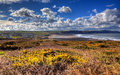 Widemouth Bay North Cornwall near Bude UK with yellow gorse in HDR Royalty Free Stock Photo