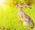Wild african hare Stock Photos