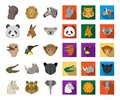 Wild animal cartoon,flat icons in set collection for design. Mammal and bird vector symbol stock web illustration. Royalty Free Stock Photo
