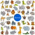 Wild animal characters big set Royalty Free Stock Photo