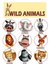 Wild Animal Chart