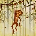 Wild animal Monkey in jungle forest background