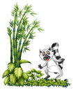 A wild animal near the bamboo plant illustration of racoon on white background Stock Photography